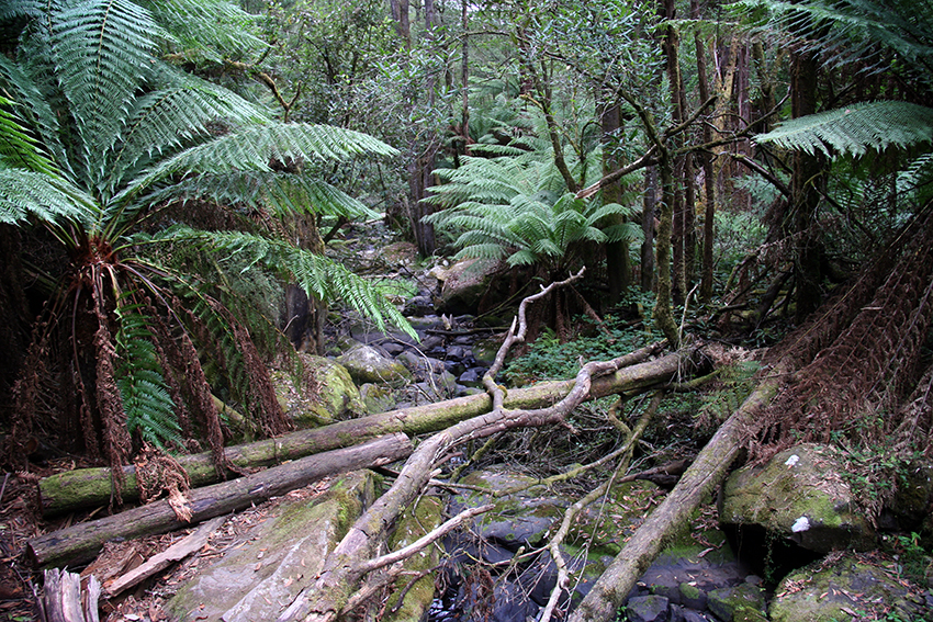 lush jungle – andre mount photoblog